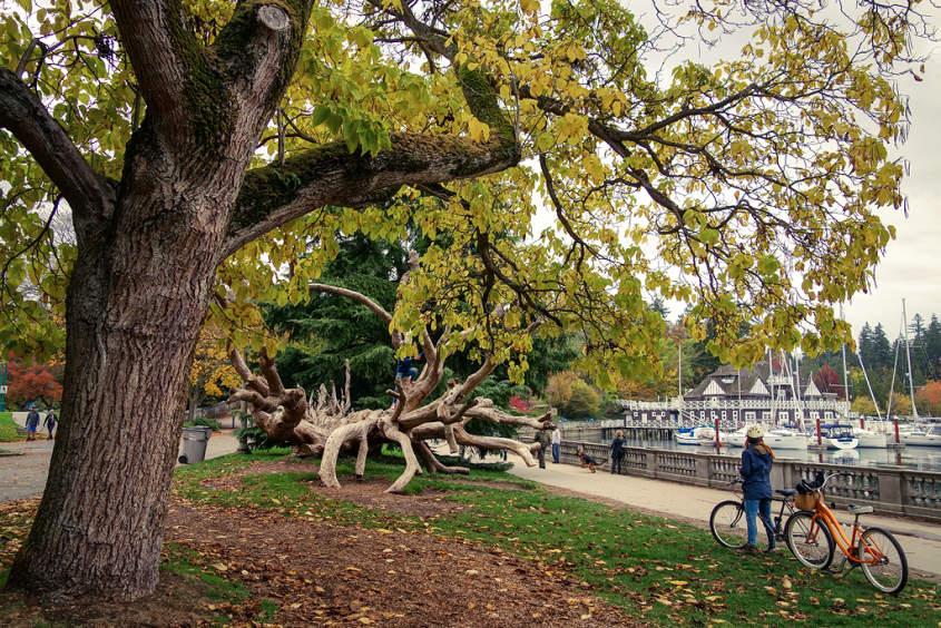 Stanley Park. Vancouver, BC. (Cortesía de TourismVancouver)